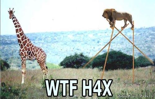 WTF HAX