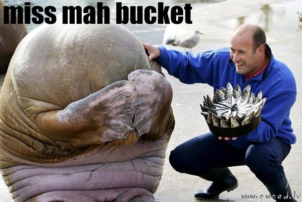 Miss my bucket