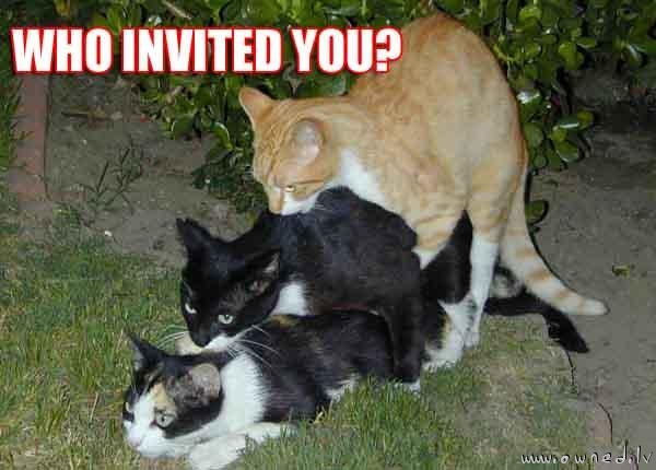 Who invited you ?
