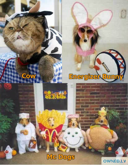 animal Halloween costumes