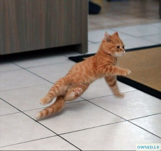 B-dancing kitty