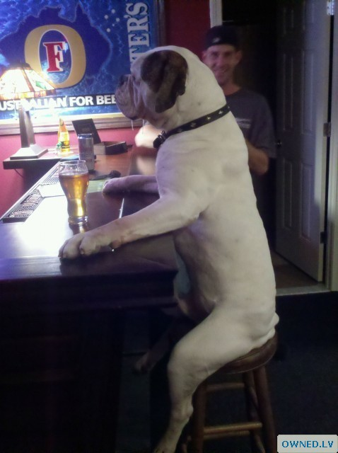 beer drinking dog!