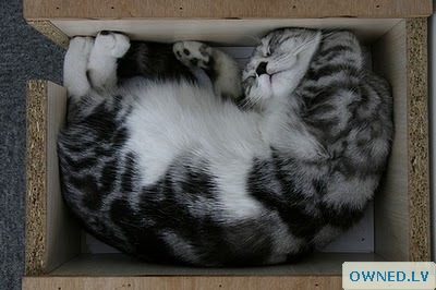 This cat looks so pleased sleeping in the box