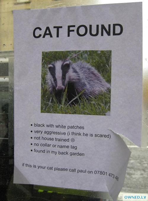 Cat Found!