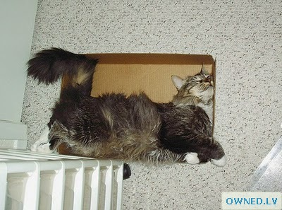 This cat loves sleeping in the box :)