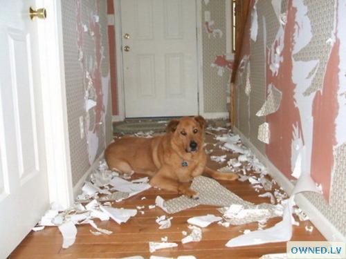 Dog FAIL!