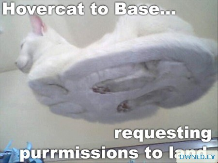 ... requesting purrmissions to land