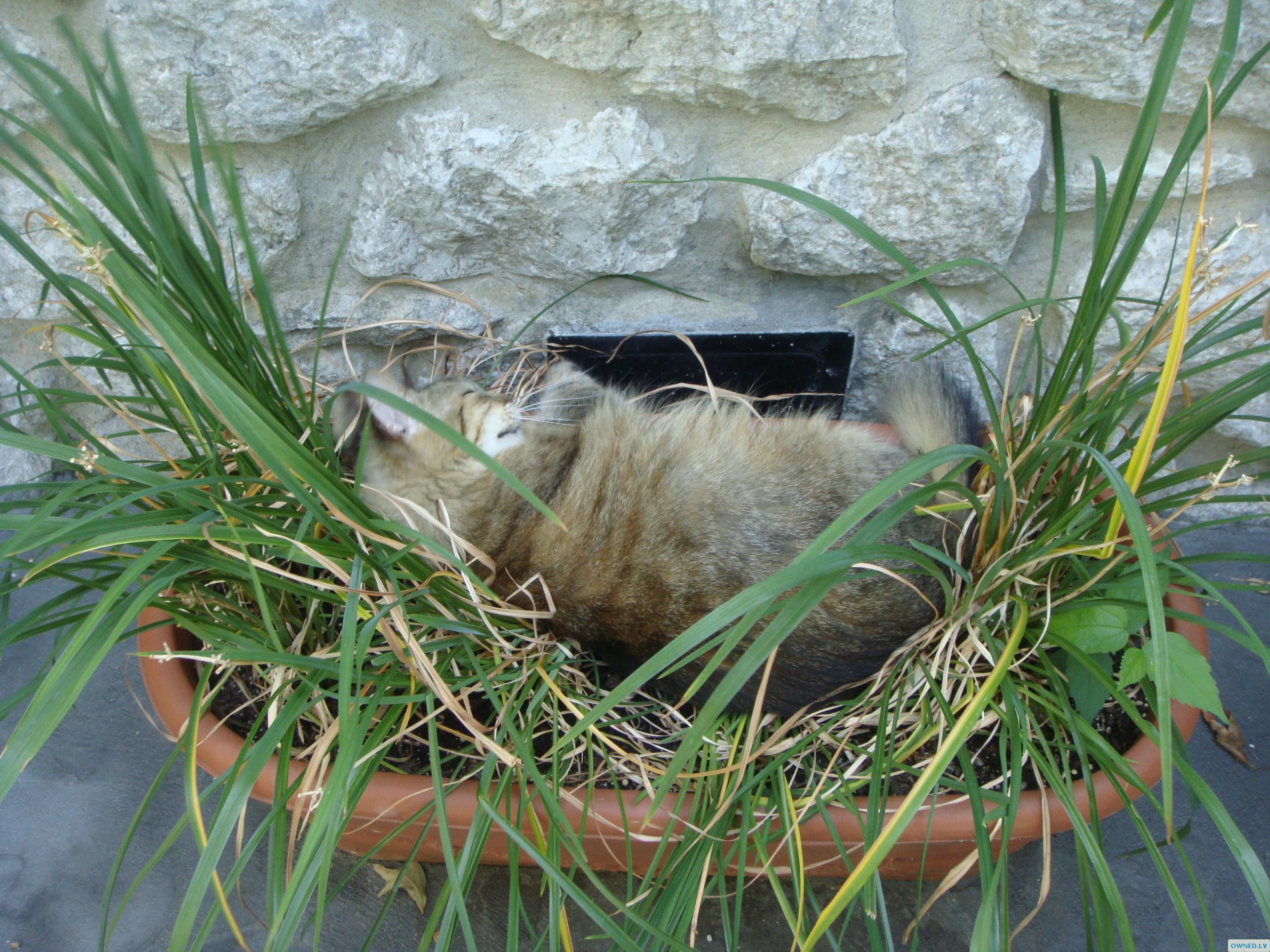 she sleeping in my plants