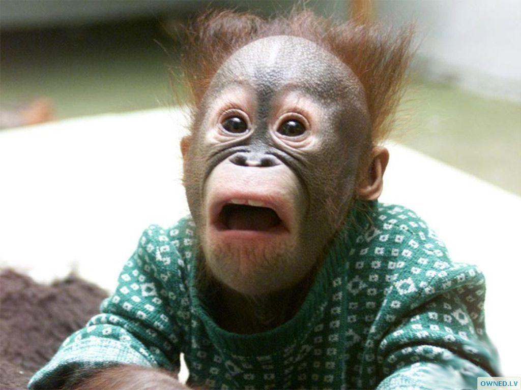 Freaky Primate