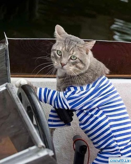 Navy style kitty!