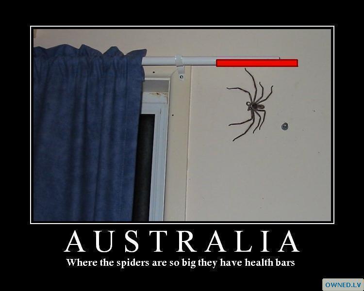 spiders life....