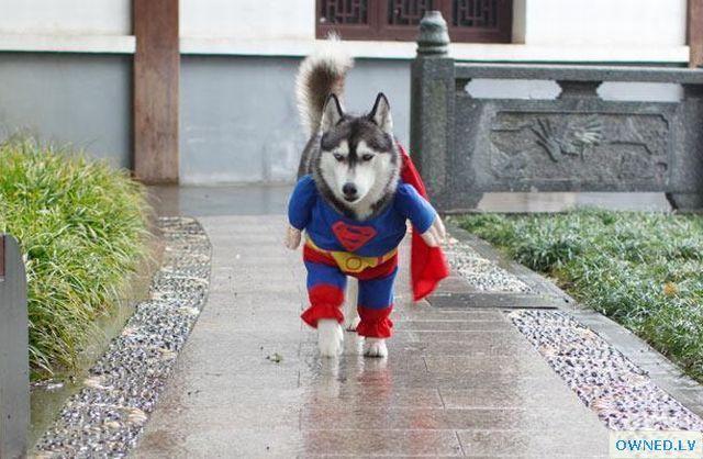 Super-dog?