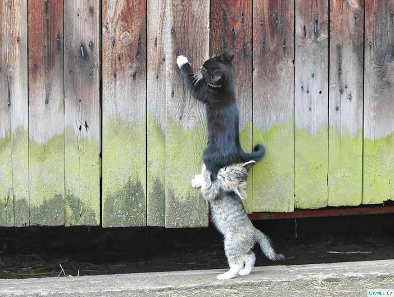 Team work kittens