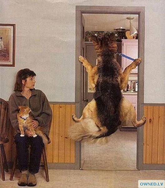 Funny doggie!