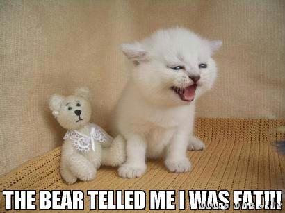 The bear ...