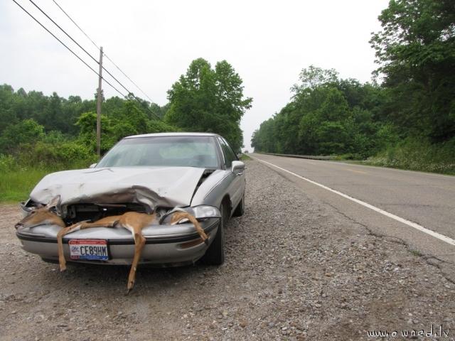 Deer vs car