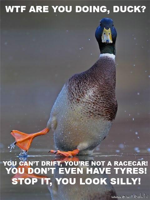 Duck ?