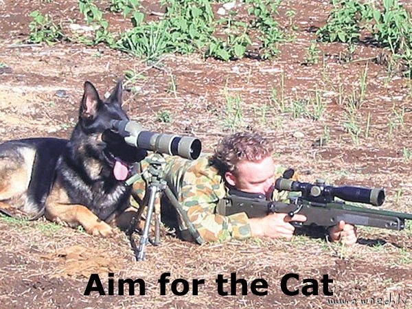 Aim for the cat