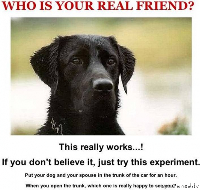 Who is your real friend ?