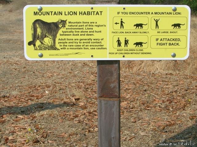 What to do if you encounter a mountain lion