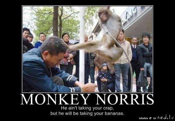 Monkey Norris