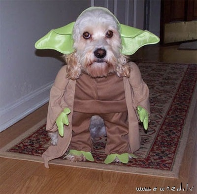 Yoda is real