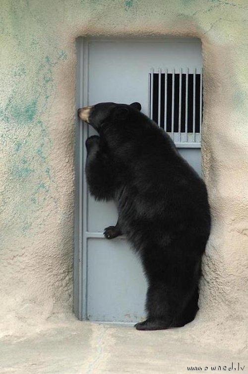 Anybody home ?