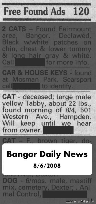 Found dead cat