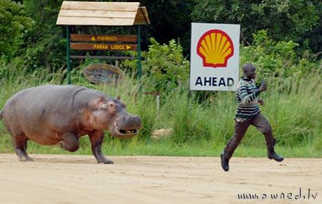 Run Forest ... RUN !!!