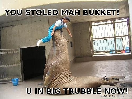 You stoled my bucket