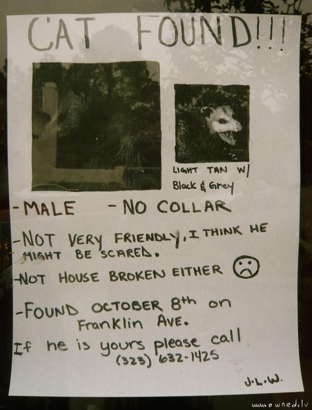 Cat found !!!