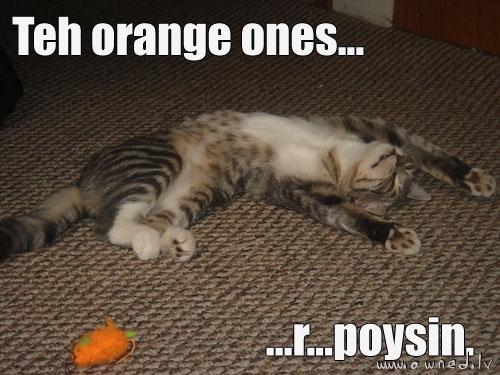 The orange ones are poison ...