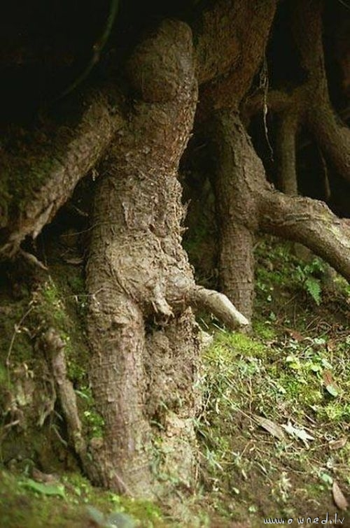 Horny tree