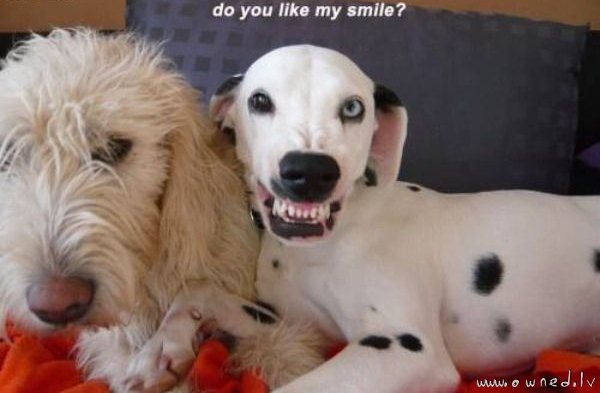 Do you like my smile ?