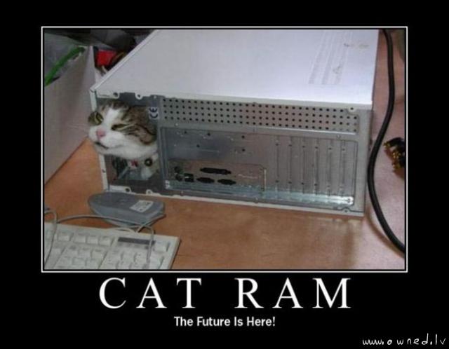 Cat ram