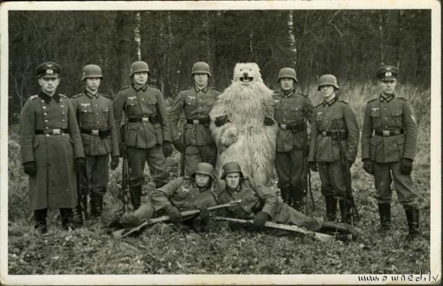 Strange bear