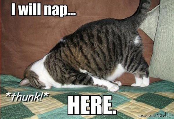 I will nap here