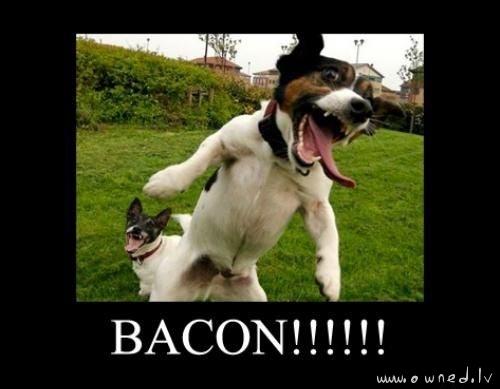 Bacon !!!