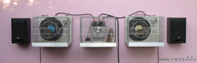 Hamster powered speakers