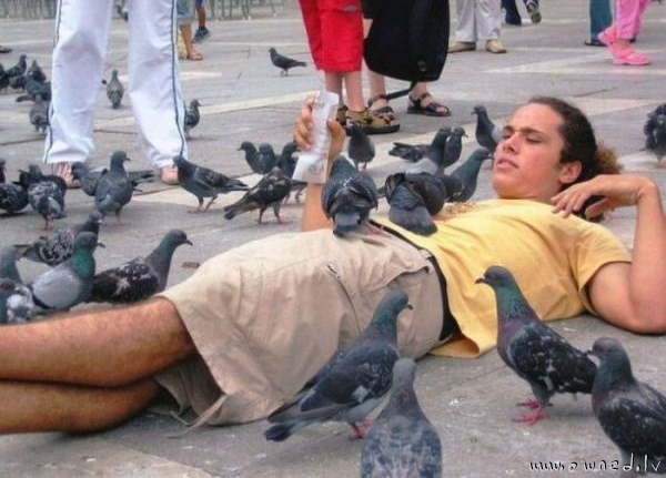 Just feeding birds