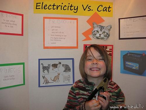 Electricity vs cat
