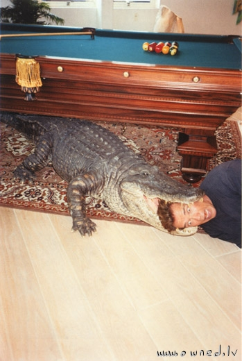 Crocodile under the table