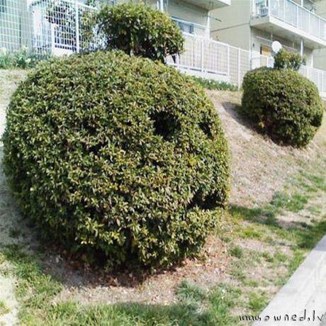 Strange bush art
