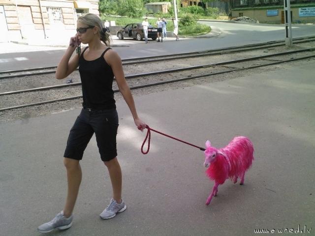 Strange pet