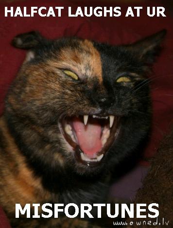 Halfcat laughs at your misfortunes