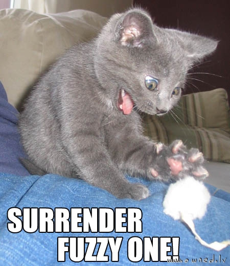 Surrender fuzzy one !