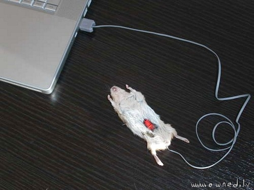 Real USB mouse