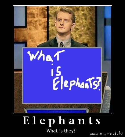 What is elephants ?