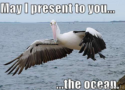 I present to you the ocean