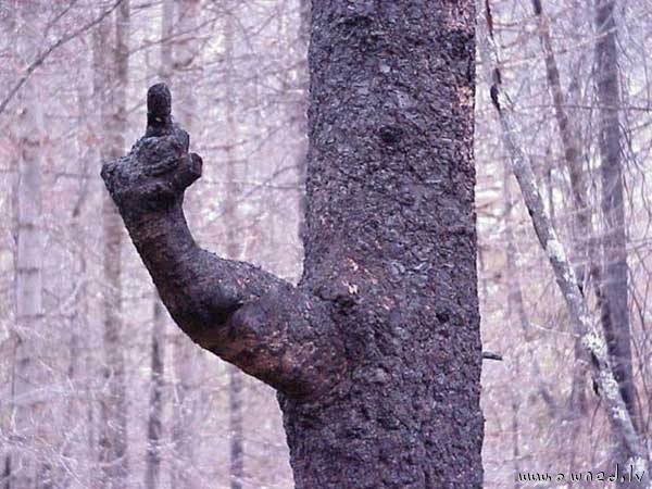 A message from nature